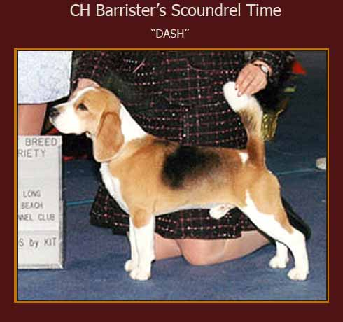 "CH Barrister's Scoundrel Time  ""Dash"""